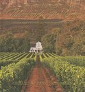 Gerald Hoberman - South Africa's Winelands of the Cape